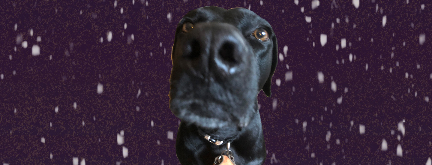 Very cute dog nose in space
